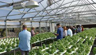 Hydroponic agriculture showcases diversity of California Ag production