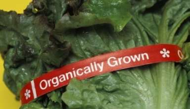 Update on Organic Certification Cost Share Program