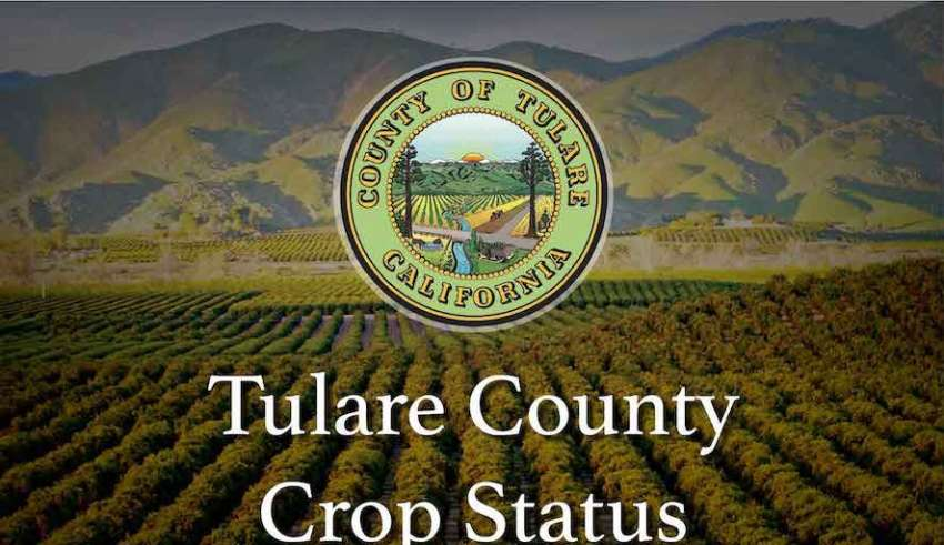 Tulare County Crop Status