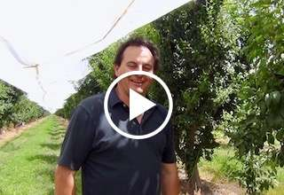 Central Valley Plum Season Update with Jimmy Simonian