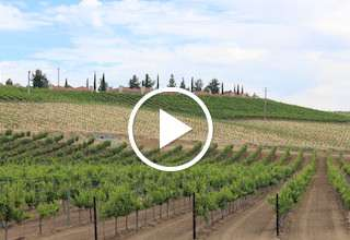 2017 CA Winegrape Crop Update with Allied Grape Growers