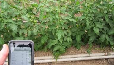 Plant Sap Analysis Technology to Better Meet Crop Needs