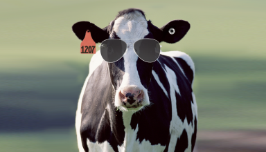 Keeping Cows Cool CalAgNet California Dairy Magazine