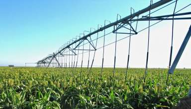 Difference in Irrigating Sorghum vs Corn Feed Crops