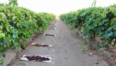 Short 2017 Crop Forces Allocation of CA Raisins