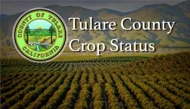 Tulare County Crop Status