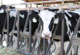 Unnecessary Trade War Risks Irreparably Damaging U.S. Dairy