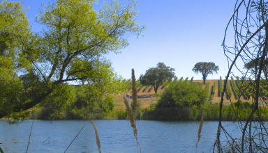 Reclamation Releases Biological Assessment for CA water operations