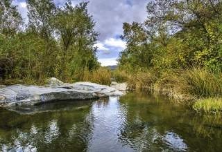 California Farm Water Coalition Statement on New Biological Assessments