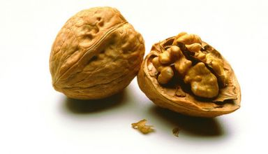 walnut genome
