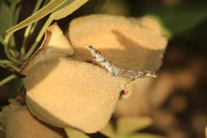 Orange worm research