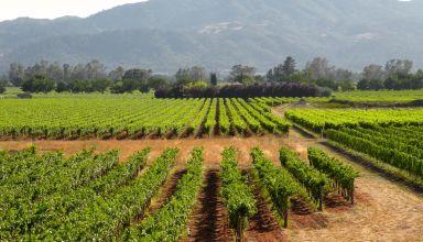 Grape Acreage Report Summary 2018