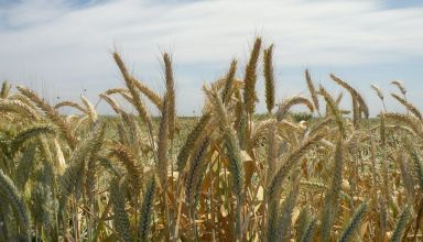 Grain Exports