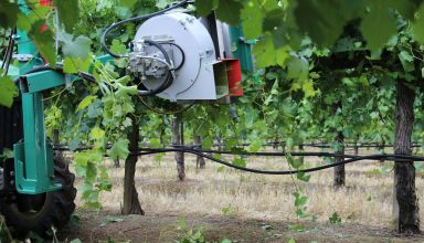 Recent Study Shows All Around Benefits of Mechanized Vineyard Canopy Management