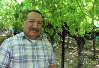 California Table Grape Crop Update with FLC George Rodriguez