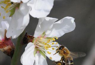 Sulfoxaflor While Ensuring Pollinator Protection